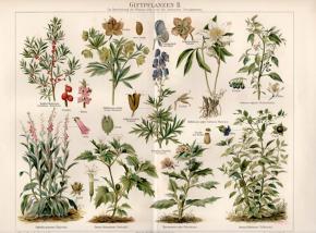 #ArteLocal / Ilustraciones botánicas: naturaleza, arte yciencia