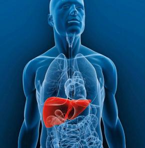 #Local / El hígado: maravillas y cuidado#ConsejoLocal