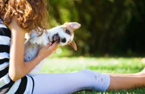 #Animalia / Las mejores apps para los amantes de susmascotas
