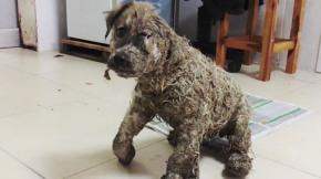 #Mundo / El milagro de Pascal: la increíble historia de un cachorro víctima de lacrueldad