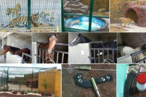 #NoticiaEstatal /Aseguran animales exóticos enJerécuaro