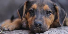 #Animalia / La importancia de esterilizar a tumascota